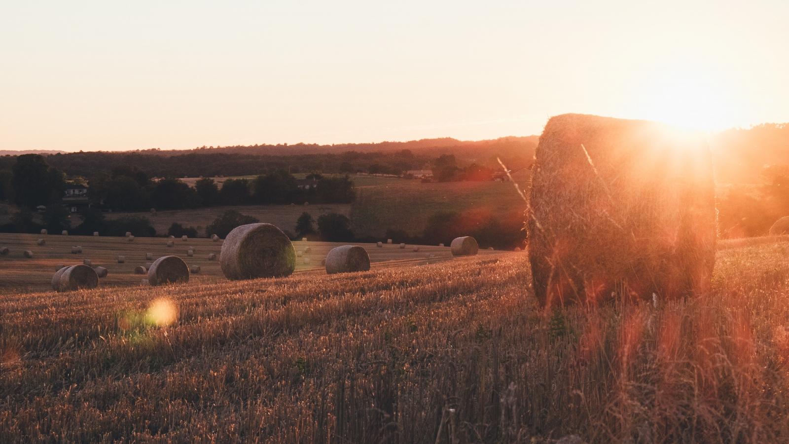 Photo d'un champs de blé avec des bottes de paille sous le soleil couchant.