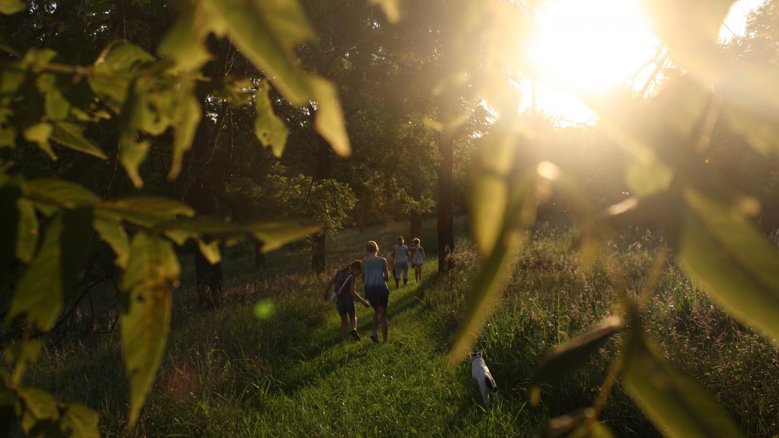 Photo d'une famille marchant sous le soleil couchant en forêt
