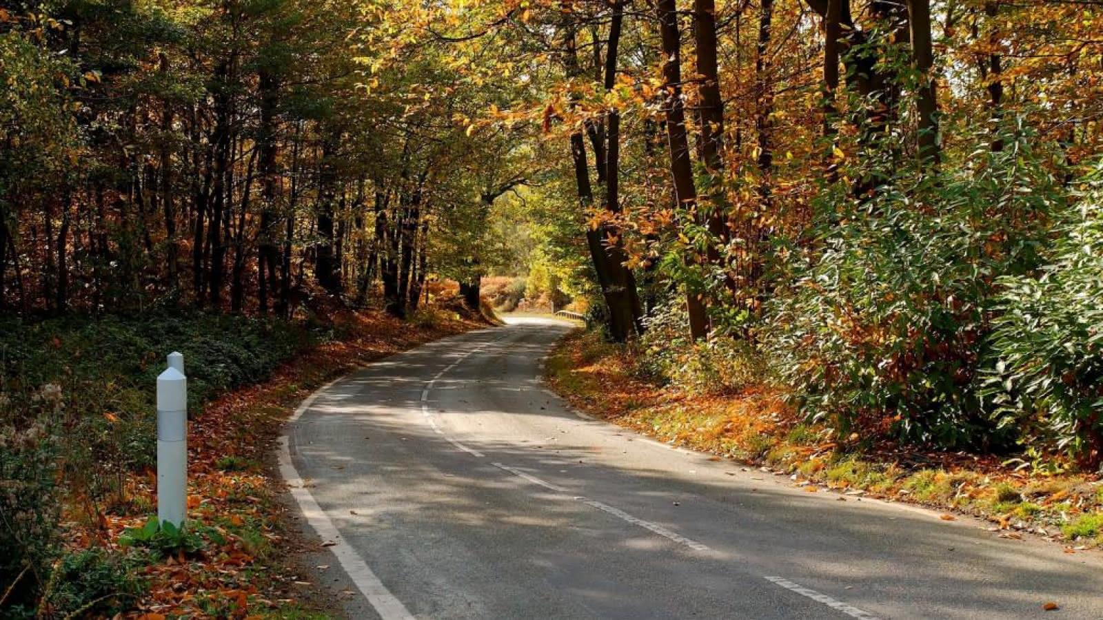 Photo d'une route en forêt de Montmorency pendant l'automne