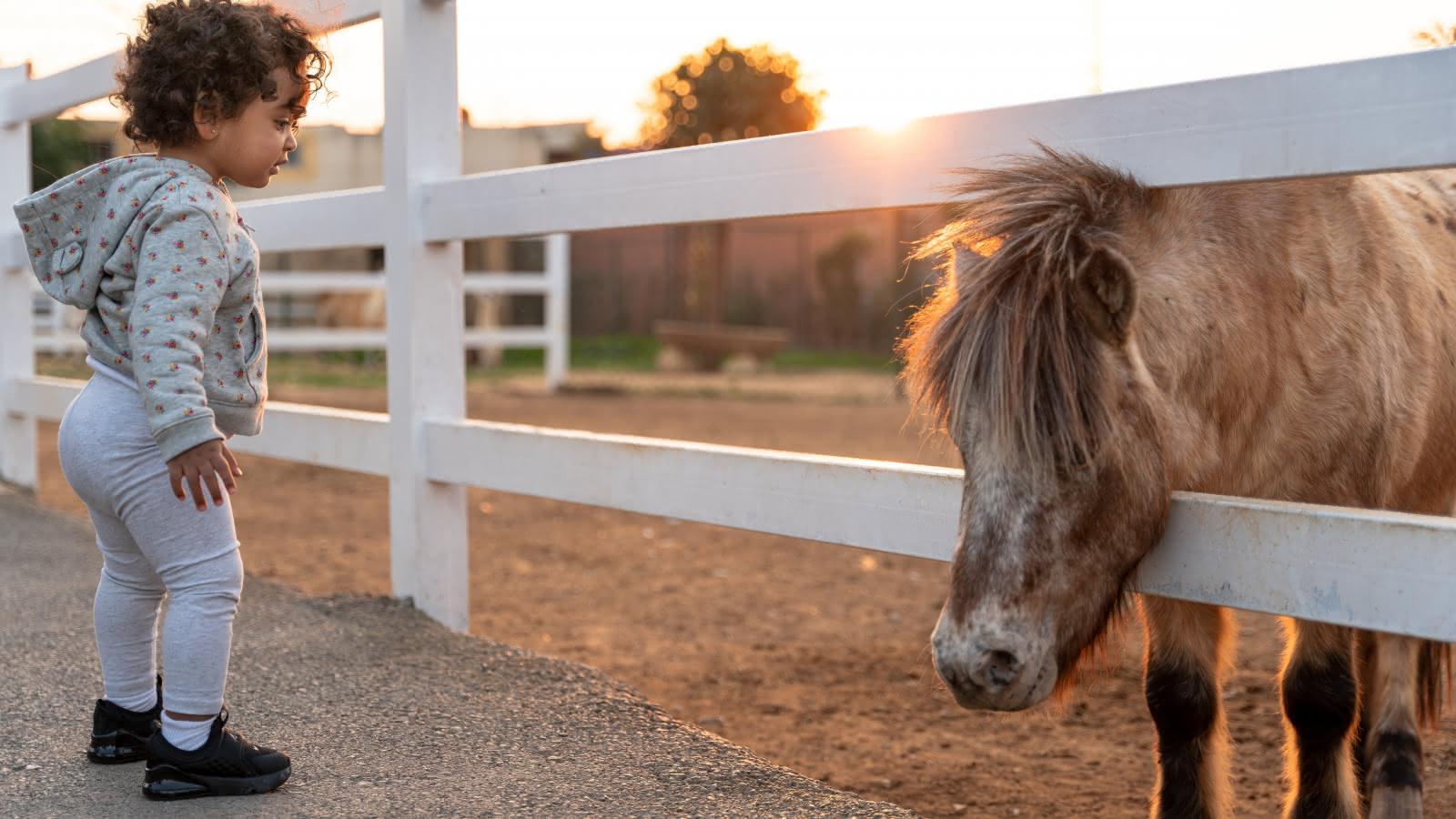 Bébé fille et un poney derrière une barrière dans un champs