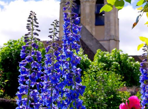 église auvers avec fleurs 1er plan