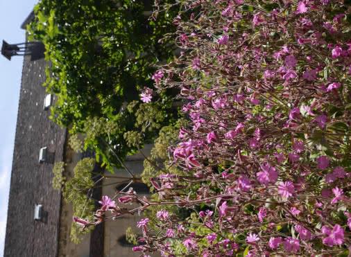 Ré-ensauvager les jardins