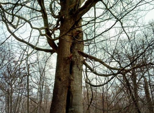 'Orry-la-ville – Hérivaux, dans la forêt des moines'