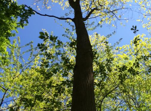 Balade autour de Chaumontel 'La vie des arbres et le réveil de la nature'