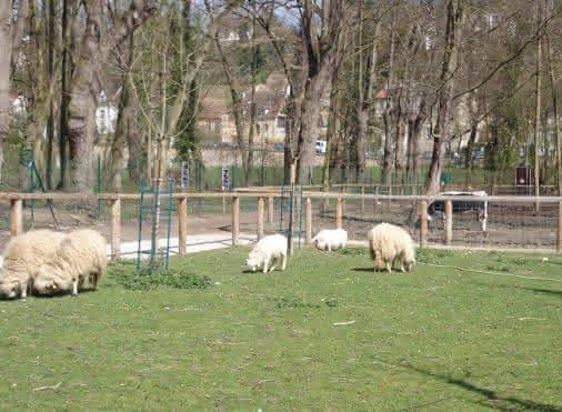 Ferme pédagogique de Pontoise - Les Z'Herbes Folles