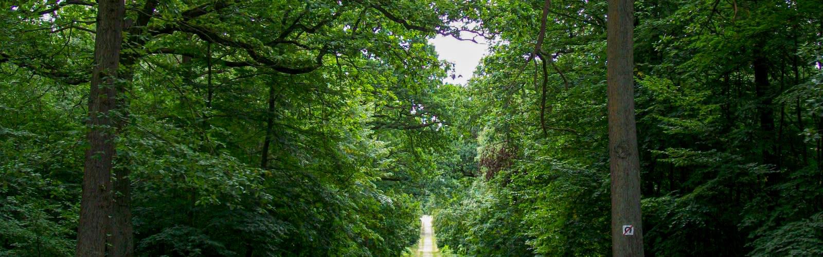 Dans la forêt de L'Isle-Adam, la route Capitaine au carrefour Capitaine