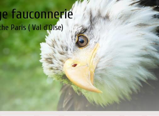 Stage De Fauconnerie
