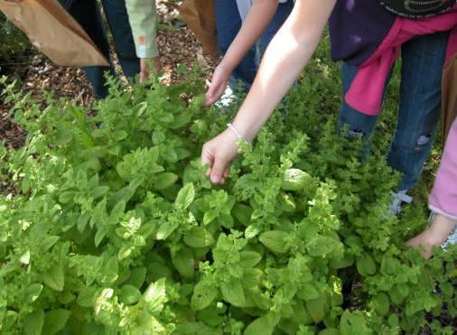 Activité secrets de plantes