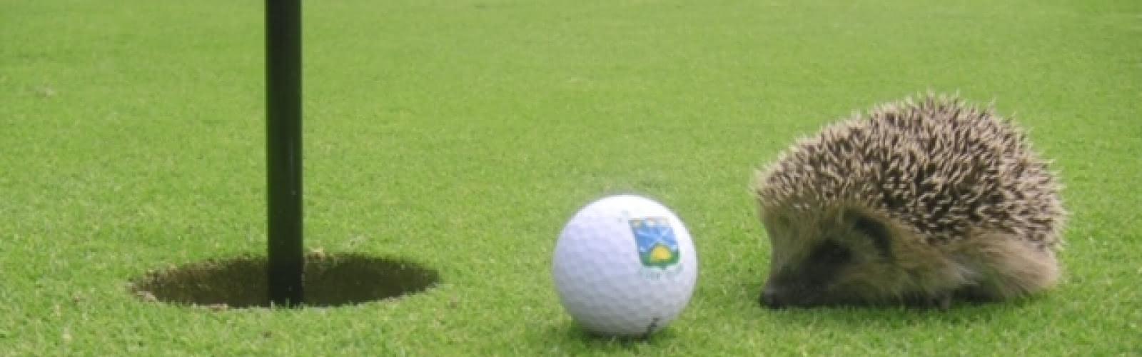 Golf Club d'Ableiges