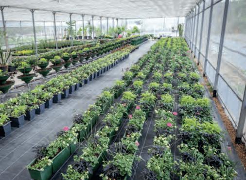 Centre horticole d'Argenteuil